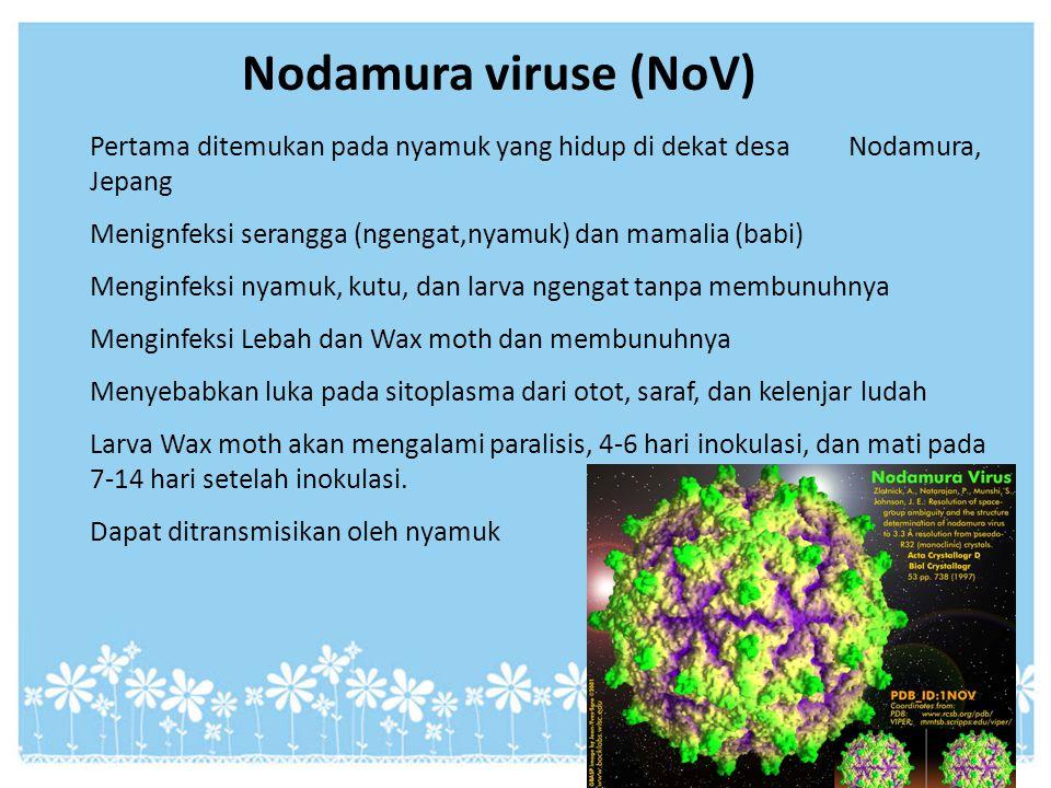 Nodamura viruse (NoV) Pertama ditemukan pada nyamuk yang hidup di dekat desa Nodamura, Jepang.