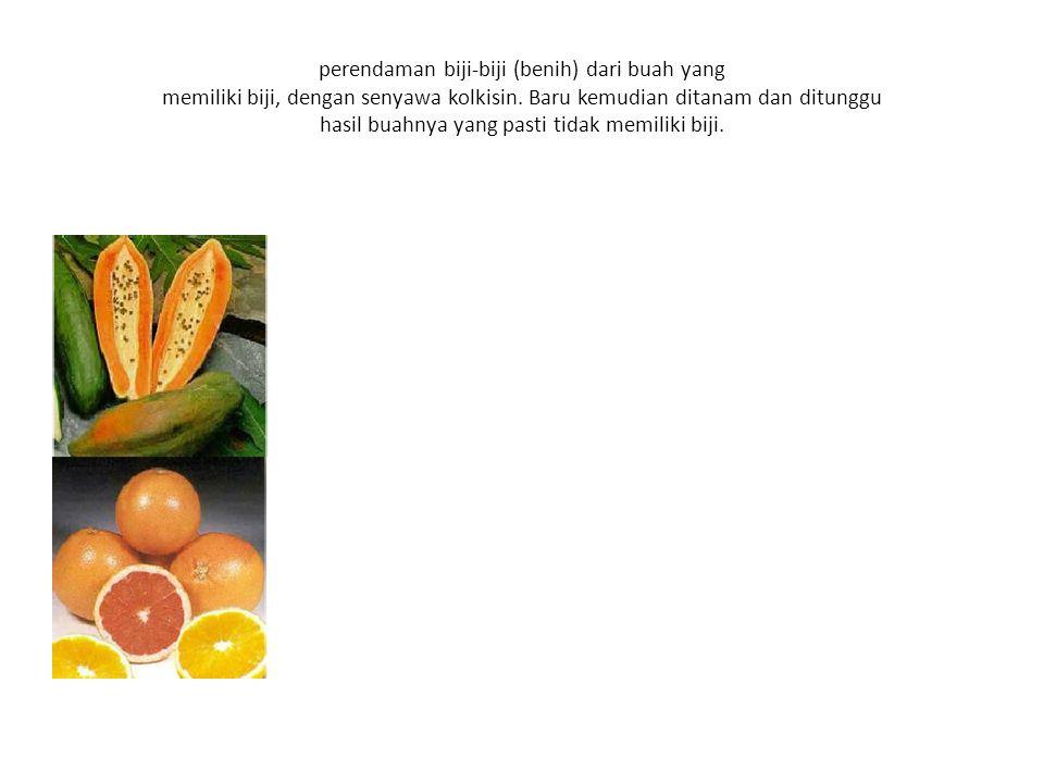 perendaman biji-biji (benih) dari buah yang memiliki biji, dengan senyawa kolkisin.