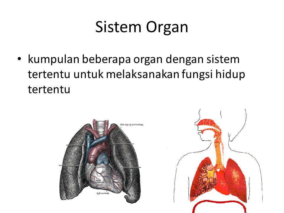 Sistem Organ kumpulan beberapa organ dengan sistem tertentu untuk melaksanakan fungsi hidup tertentu.