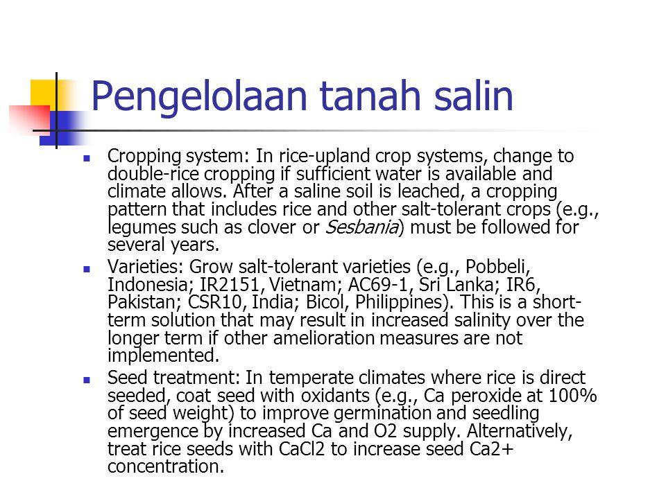 Pengelolaan tanah salin