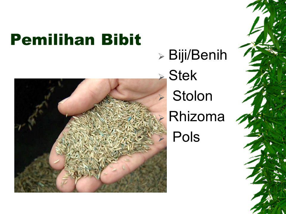 Pemilihan Bibit Biji/Benih Stek Stolon Rhizoma Pols