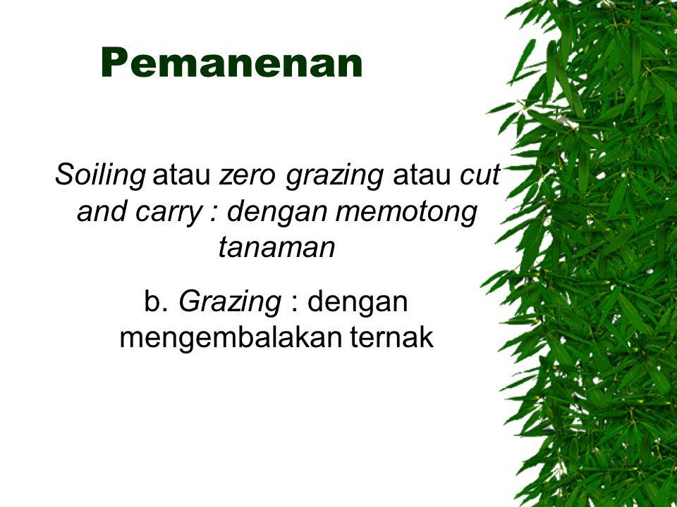 Pemanenan Soiling atau zero grazing atau cut and carry : dengan memotong tanaman.
