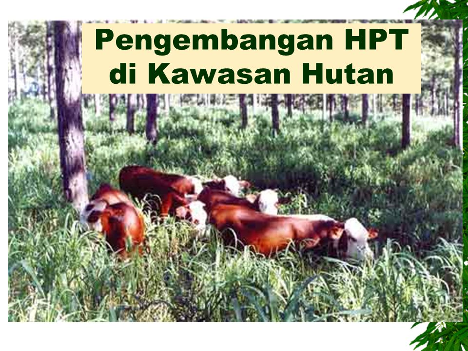 Pengembangan HPT di Kawasan Hutan