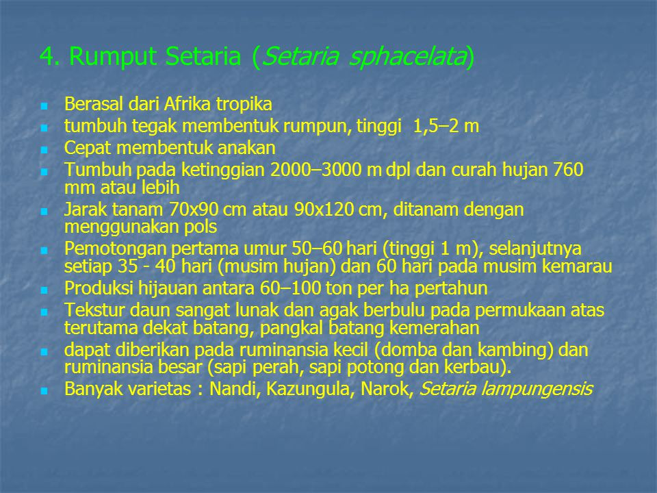 4. Rumput Setaria (Setaria sphacelata)