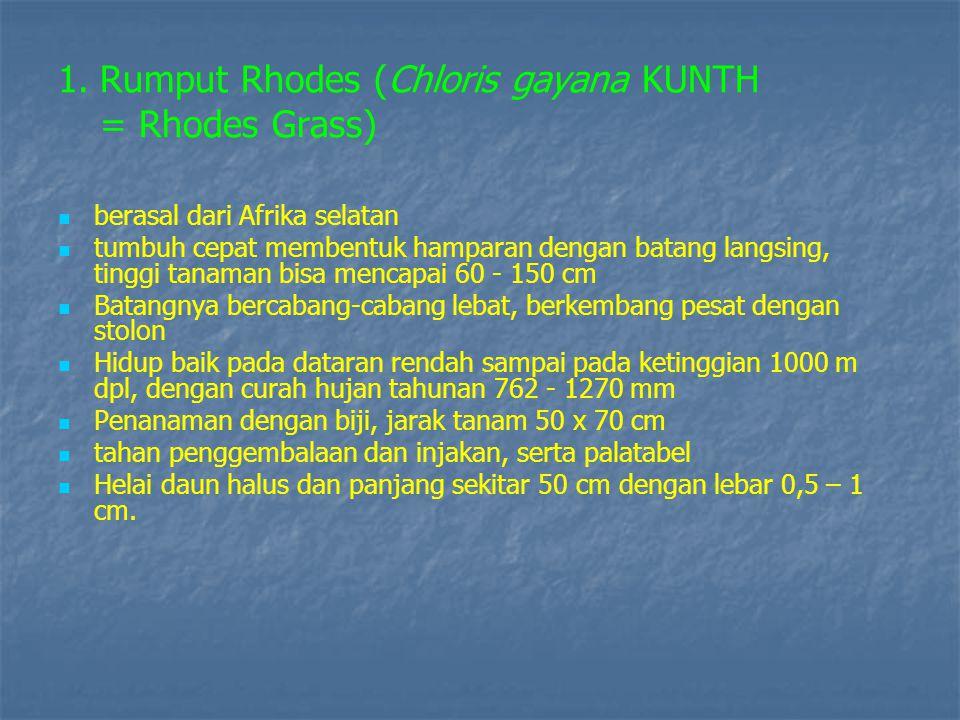 Rumput Rhodes (Chloris gayana KUNTH = Rhodes Grass)