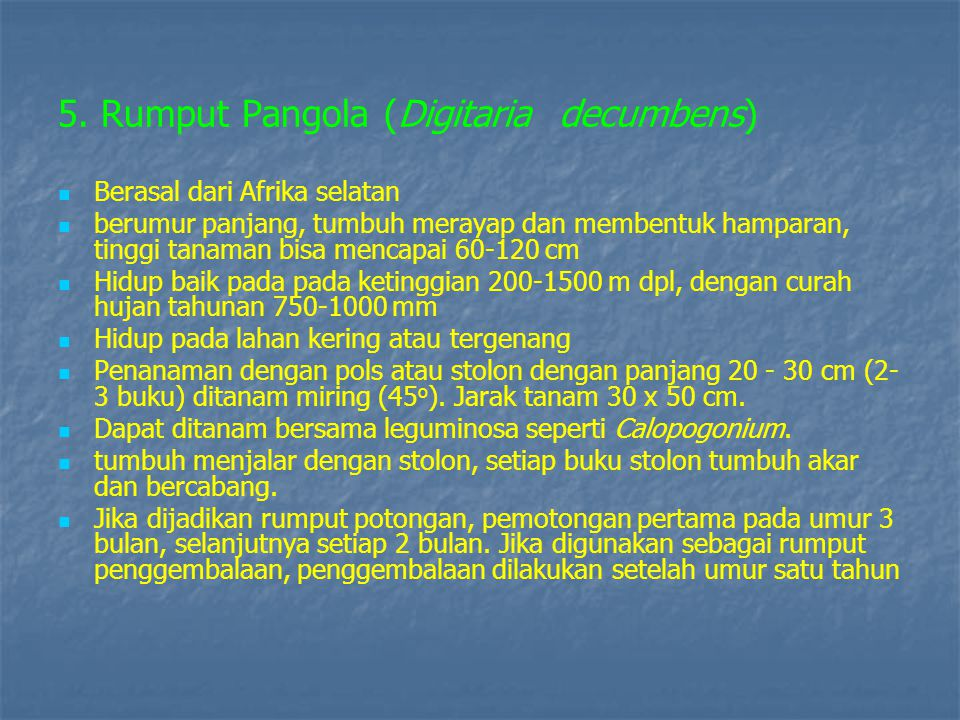 5. Rumput Pangola (Digitaria decumbens)