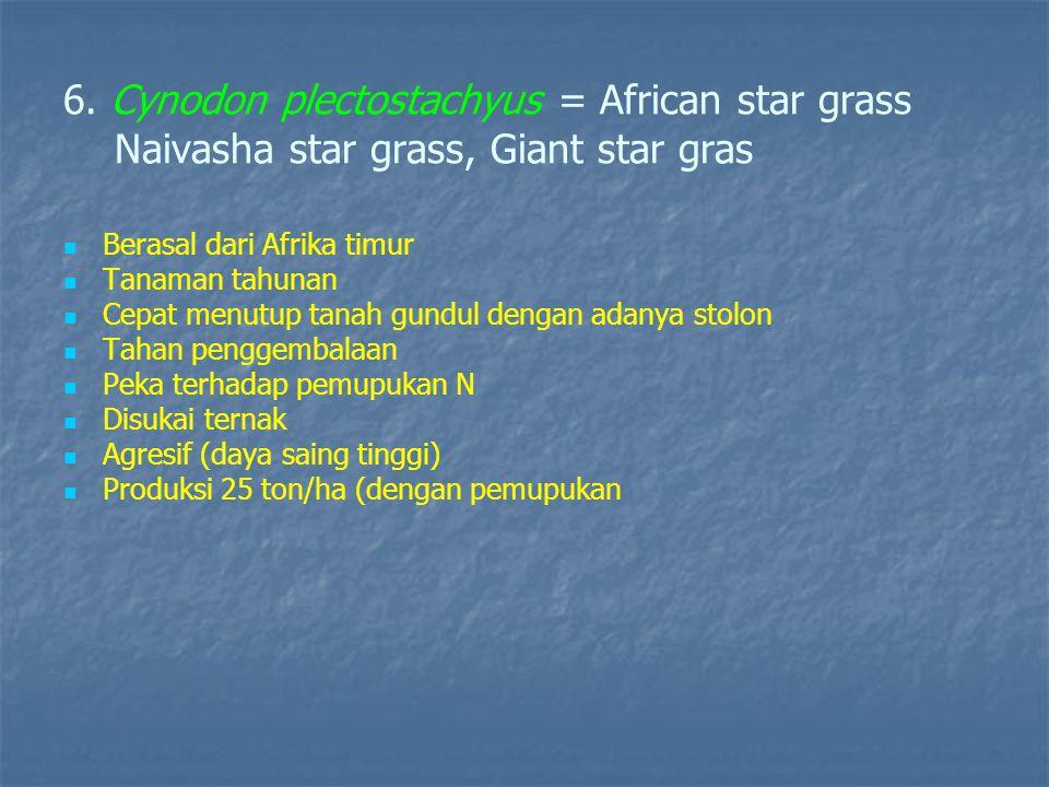 6. Cynodon plectostachyus = African star grass Naivasha star grass, Giant star gras