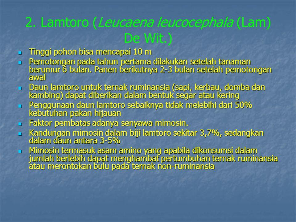 2. Lamtoro (Leucaena leucocephala (Lam) De Wit.)