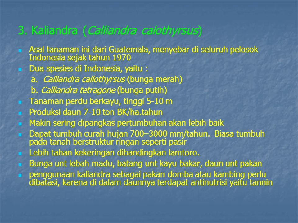 3. Kaliandra (Calliandra calothyrsus)