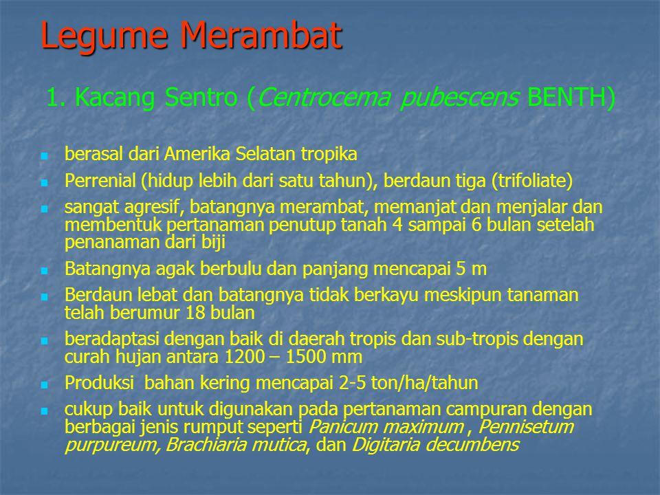 Legume Merambat 1. Kacang Sentro (Centrocema pubescens BENTH)