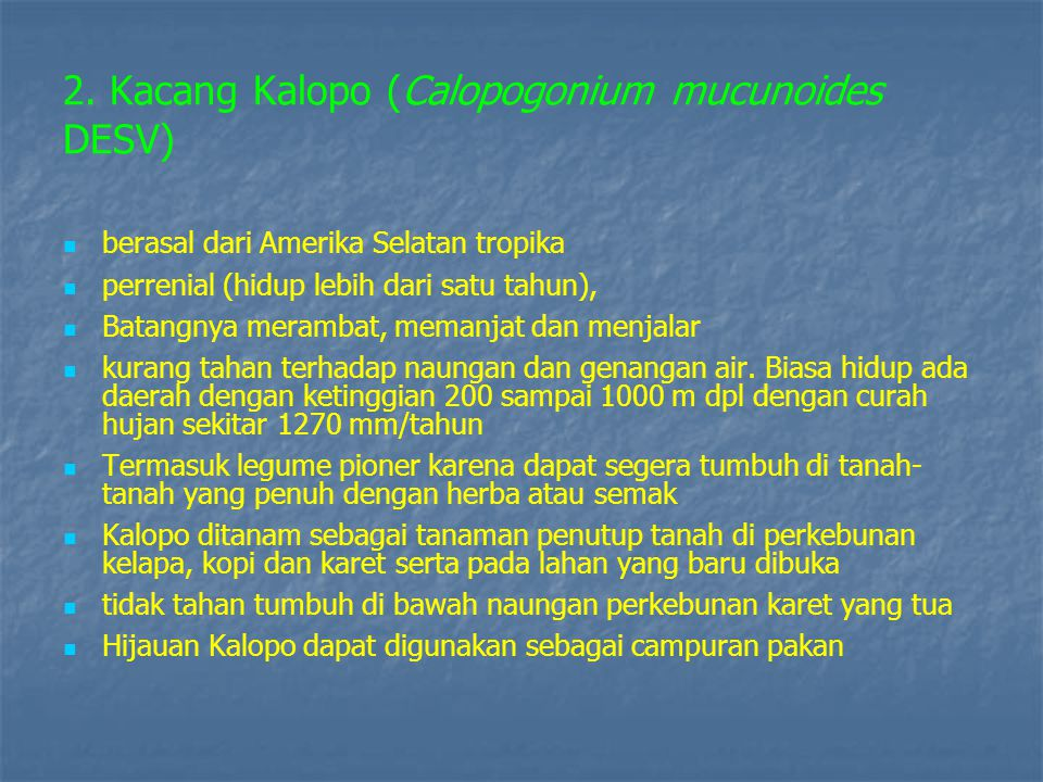 2. Kacang Kalopo (Calopogonium mucunoides DESV)