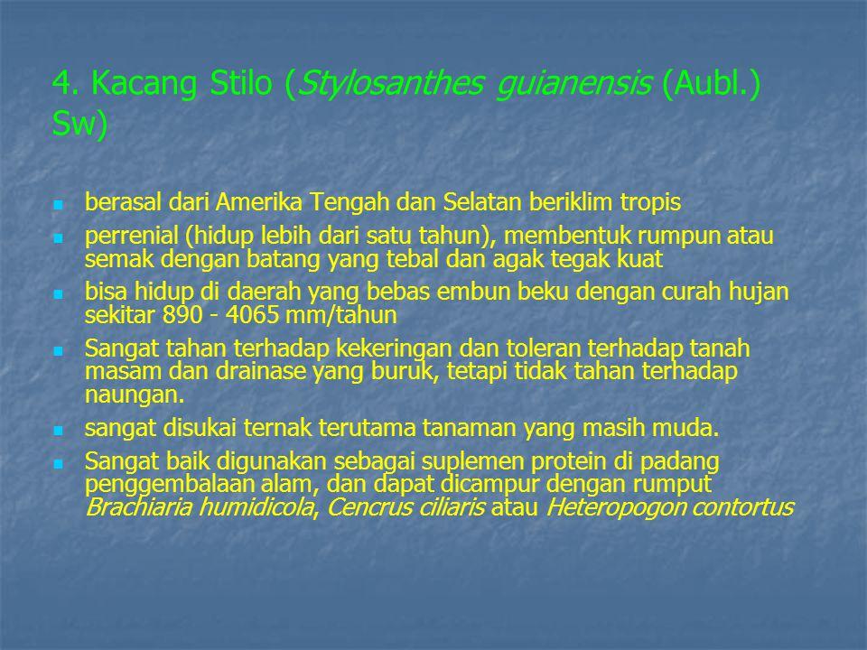 4. Kacang Stilo (Stylosanthes guianensis (Aubl.) Sw)