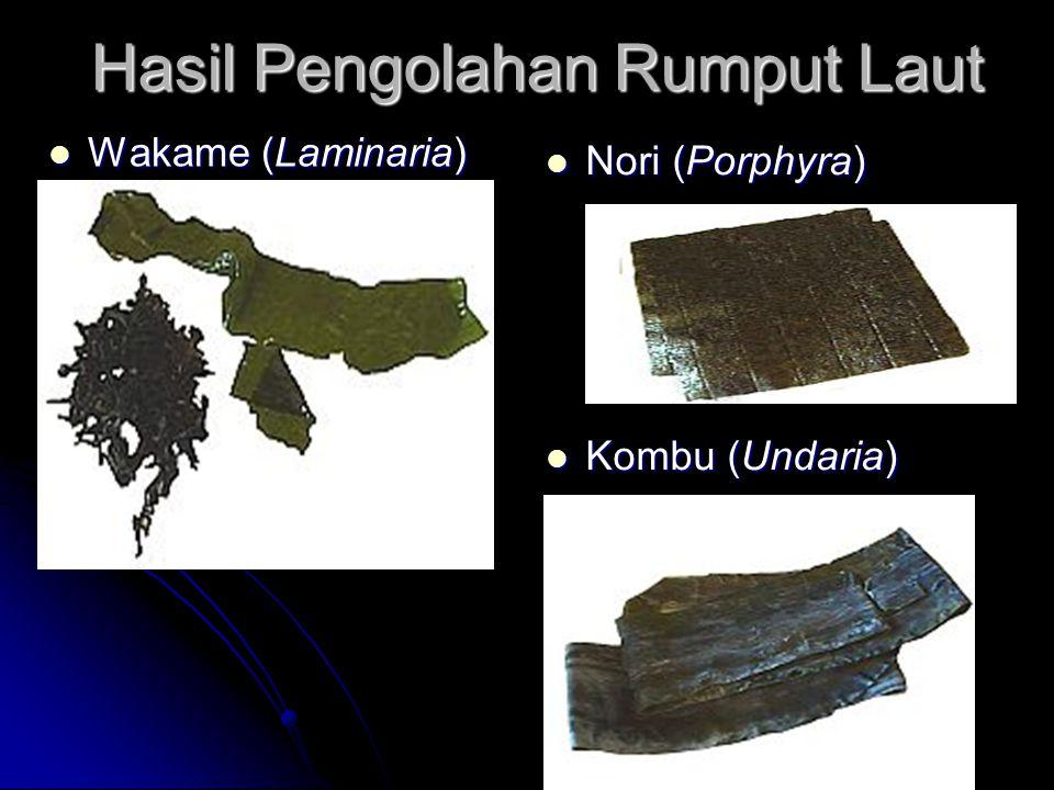 Hasil Pengolahan Rumput Laut