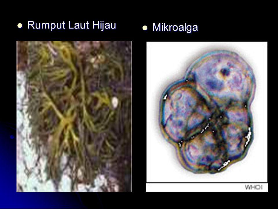 Rumput Laut Hijau Mikroalga