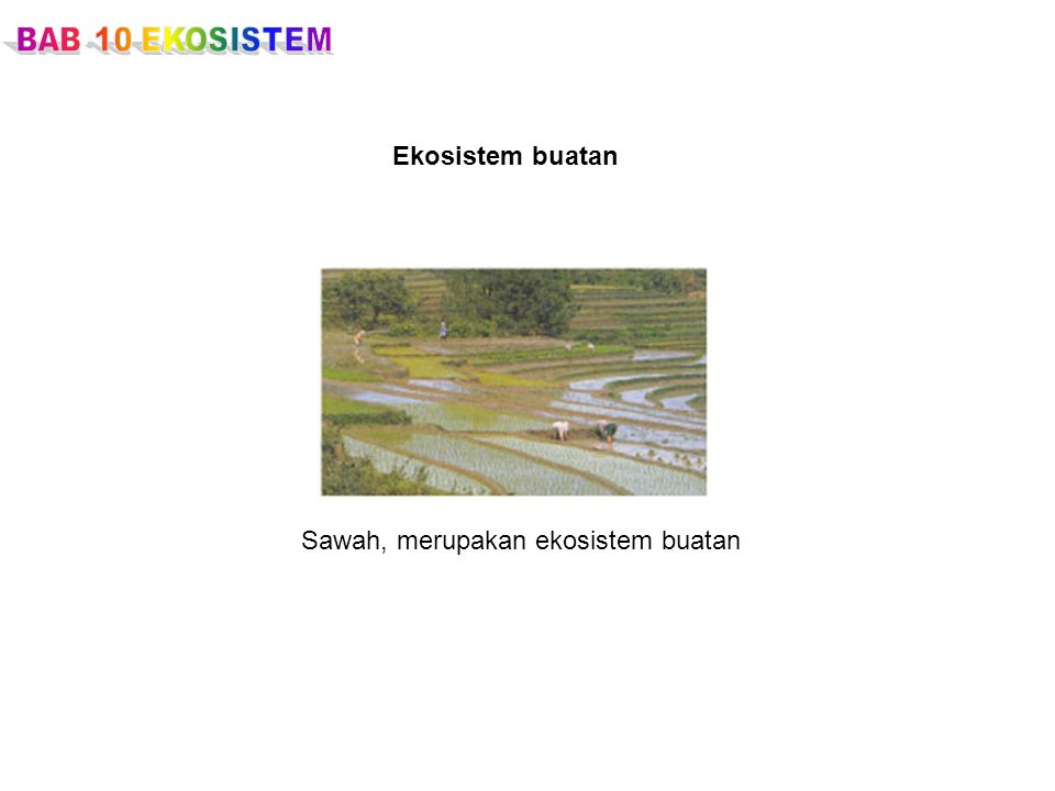 Sawah, merupakan ekosistem buatan