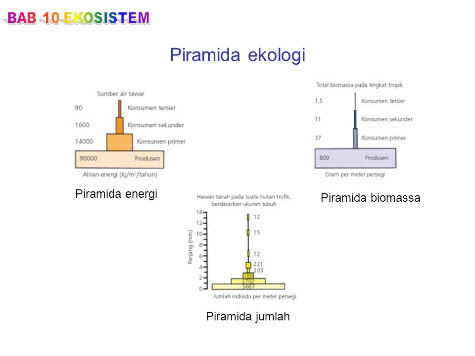 Piramida ekologi Piramida energi Piramida biomassa Piramida jumlah