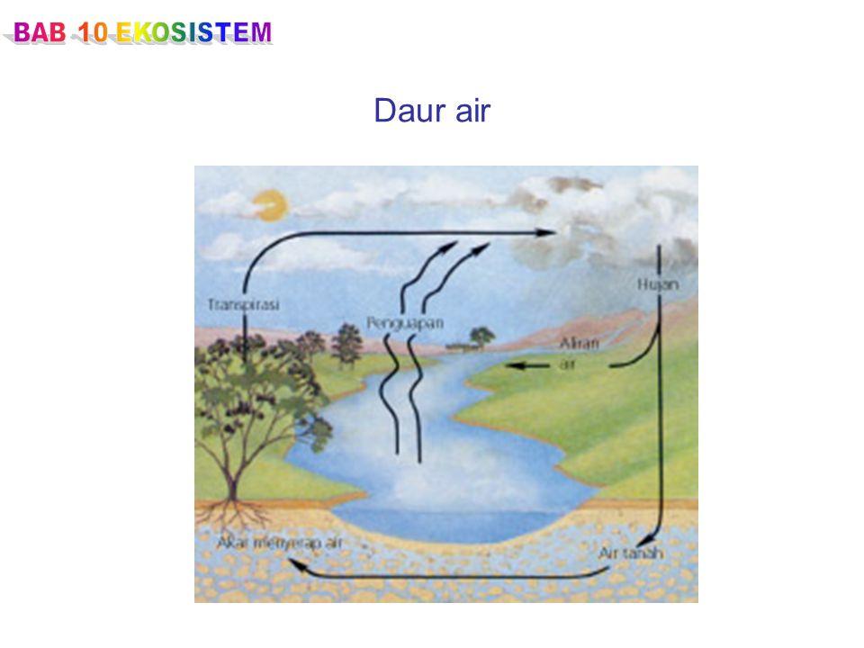 BAB 10 EKOSISTEM Daur air