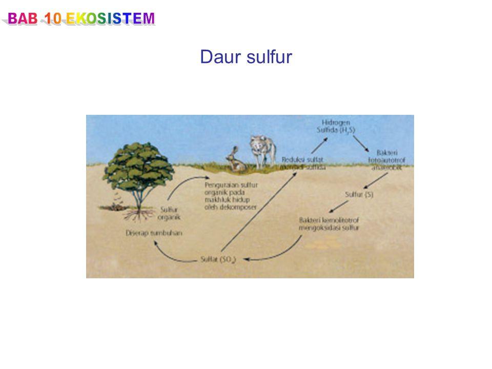 BAB 10 EKOSISTEM Daur sulfur