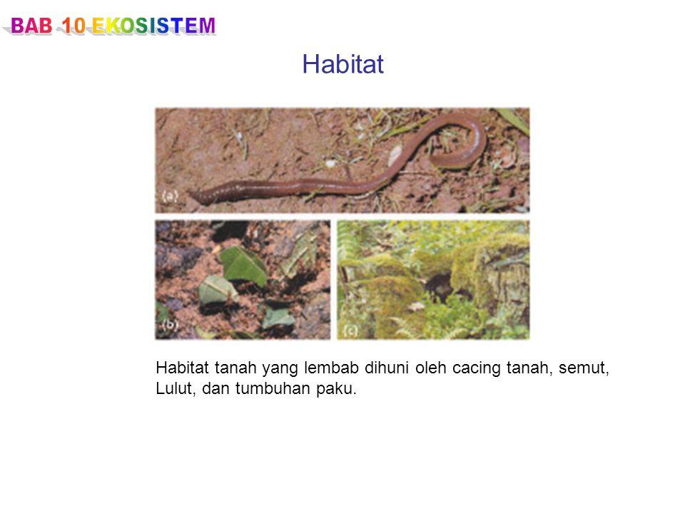Habitat Habitat tanah yang lembab dihuni oleh cacing tanah, semut,