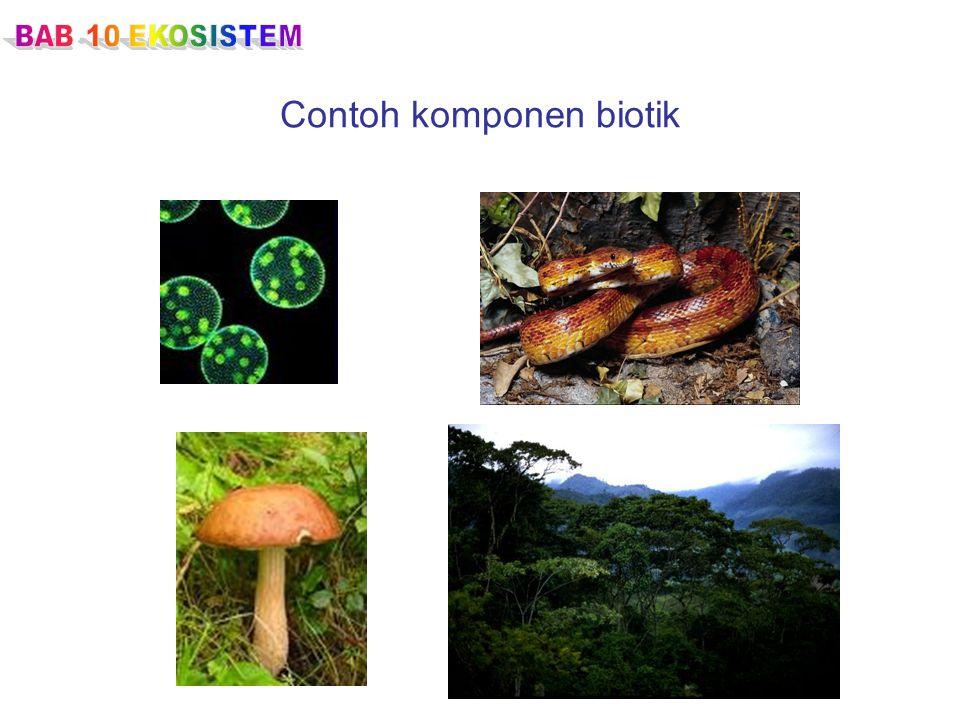 Contoh komponen biotik