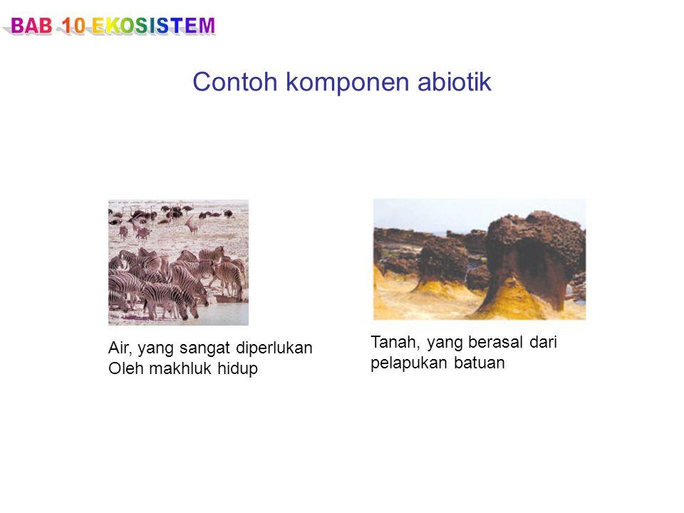 Contoh komponen abiotik