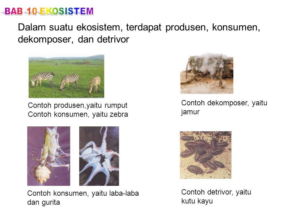 BAB 10 EKOSISTEM Dalam suatu ekosistem, terdapat produsen, konsumen, dekomposer, dan detrivor. Contoh dekomposer, yaitu.