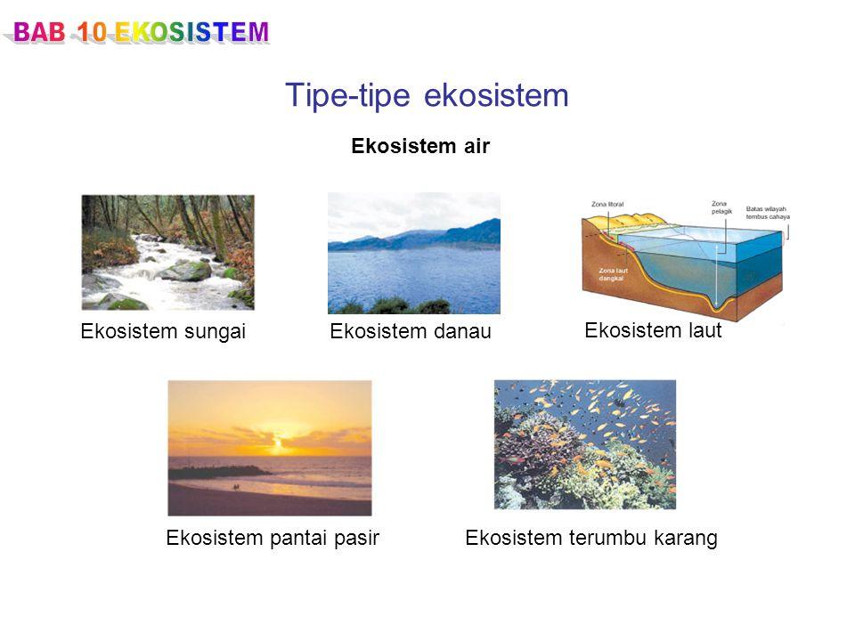 Tipe-tipe ekosistem Ekosistem air Ekosistem sungai Ekosistem danau