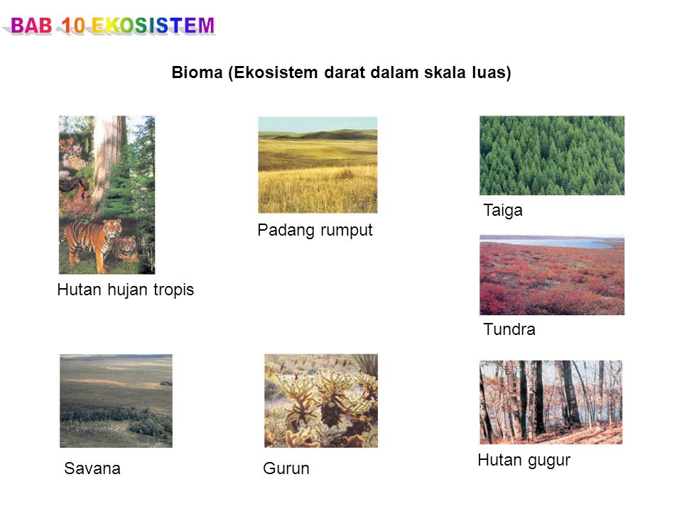 Bioma (Ekosistem darat dalam skala luas)