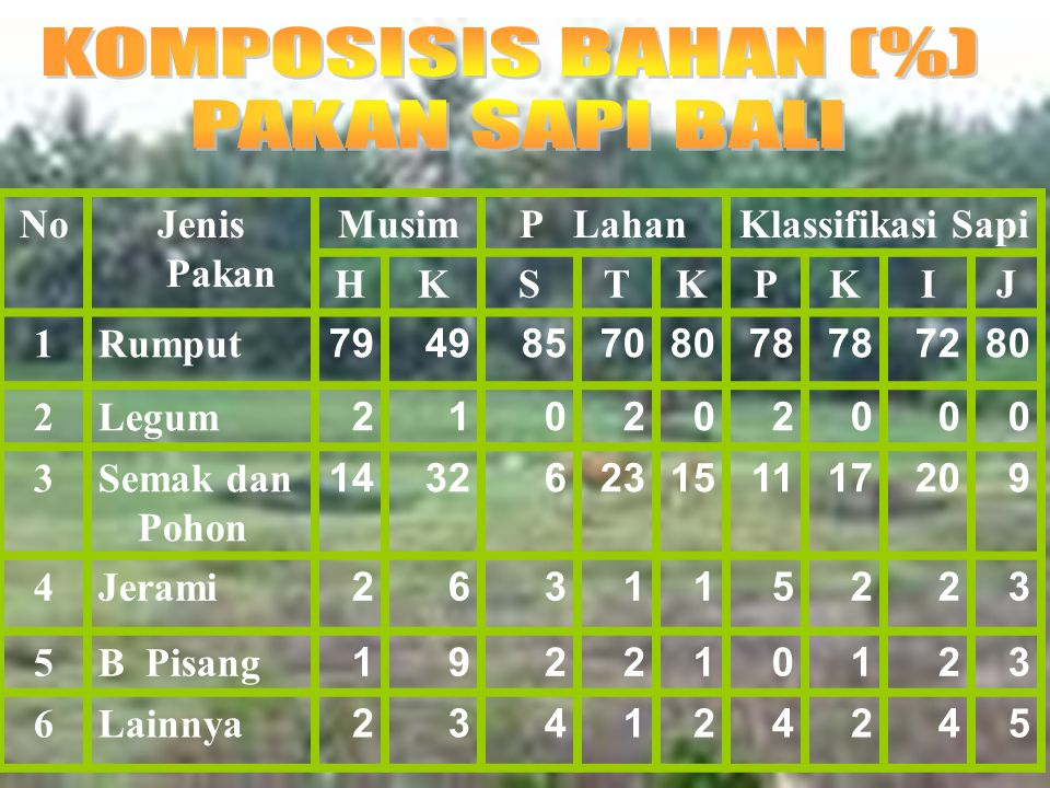 KOMPOSISIS BAHAN (%) PAKAN SAPI BALI No Jenis Pakan Musim P Lahan