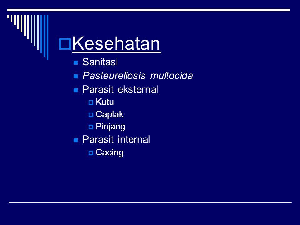 Kesehatan Sanitasi Pasteurellosis multocida Parasit eksternal