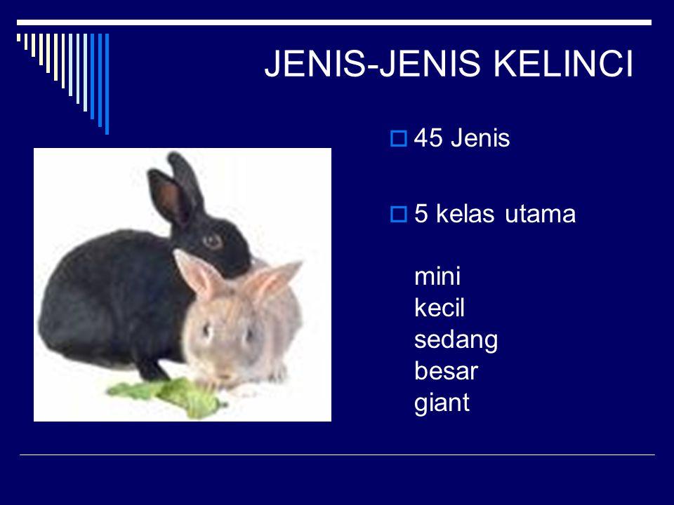 JENIS-JENIS KELINCI 45 Jenis