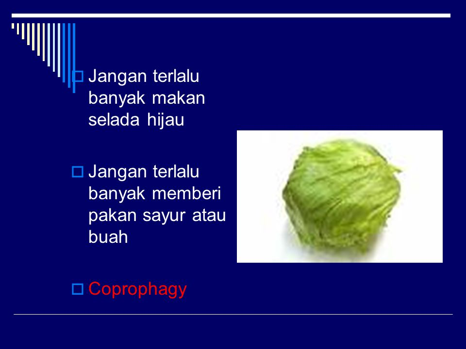 Jangan terlalu banyak makan selada hijau