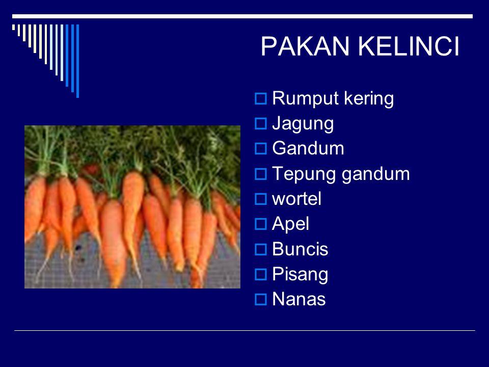 PAKAN KELINCI Rumput kering Jagung Gandum Tepung gandum wortel Apel