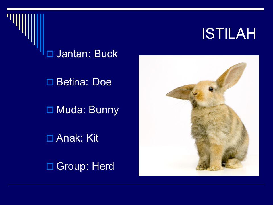 ISTILAH Jantan: Buck Betina: Doe Muda: Bunny Anak: Kit Group: Herd