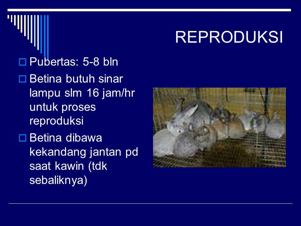 REPRODUKSI Pubertas: 5-8 bln