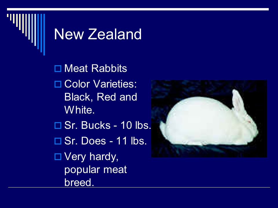 New Zealand Meat Rabbits Color Varieties: Black, Red and White.