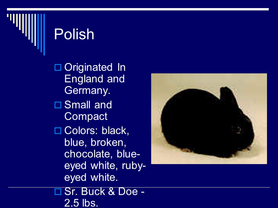 Polish Originated In England and Germany. Small and Compact