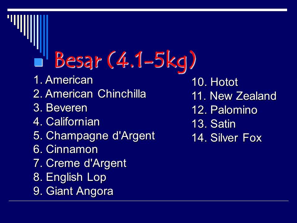Besar (4.1-5kg) 1. American 2. American Chinchilla 3. Beveren