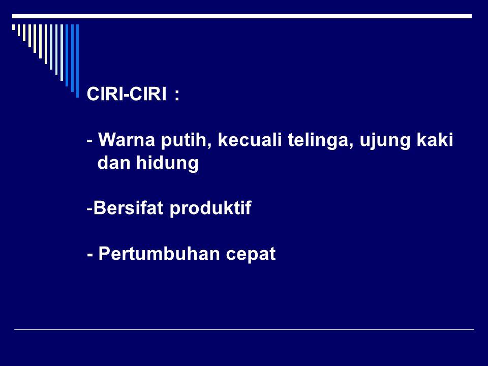 CIRI-CIRI : Warna putih, kecuali telinga, ujung kaki.