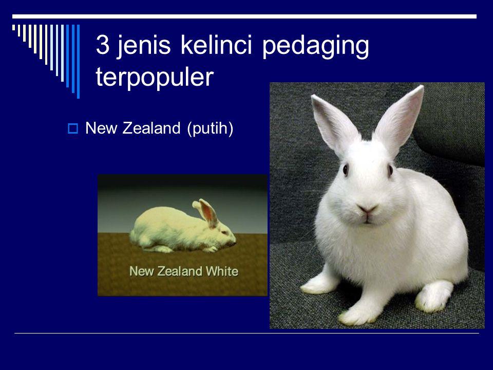 3 jenis kelinci pedaging terpopuler