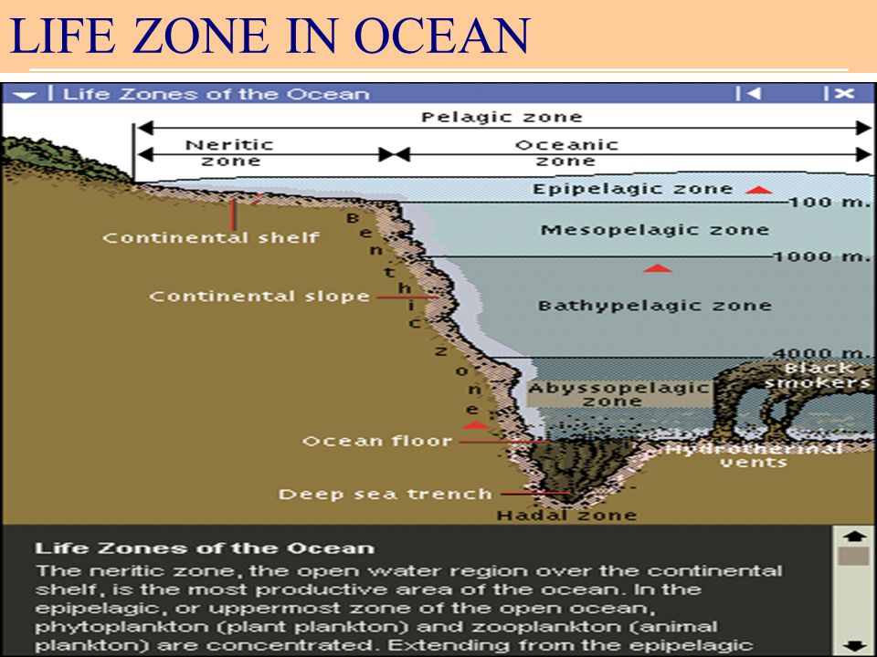 LIFE ZONE IN OCEAN
