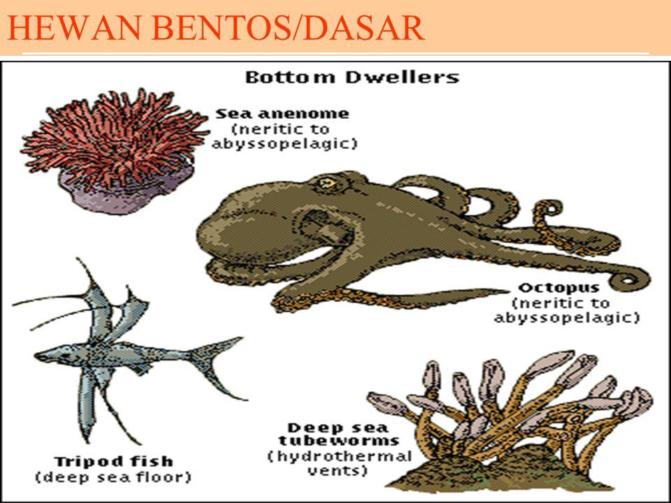 HEWAN BENTOS/DASAR