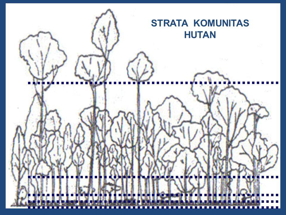 STRATA KOMUNITAS HUTAN