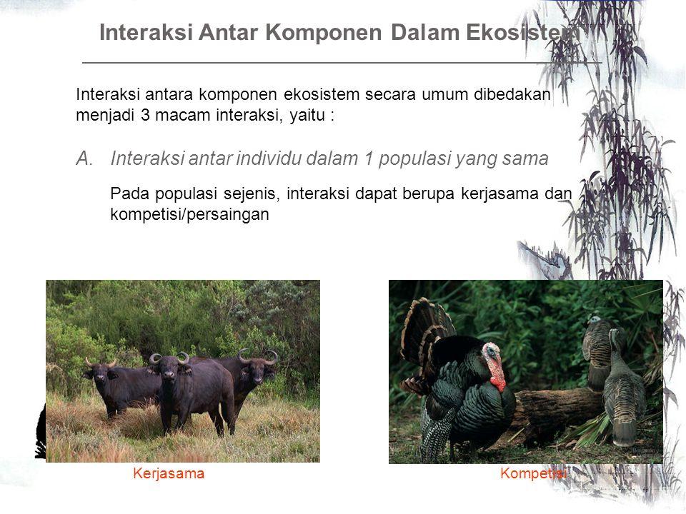 Interaksi Antar Komponen Dalam Ekosistem