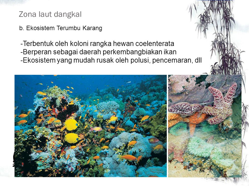 Zona laut dangkal Terbentuk oleh koloni rangka hewan coelenterata