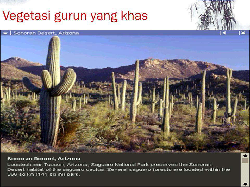 Vegetasi gurun yang khas