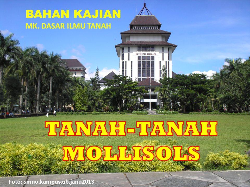 TANAH-TANAH MOLLISOLS