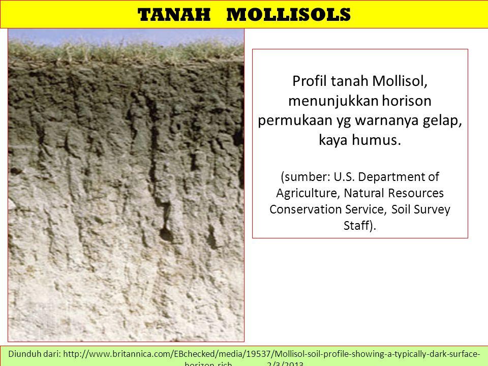 TANAH MOLLISOLS Profil tanah Mollisol, menunjukkan horison permukaan yg warnanya gelap, kaya humus.