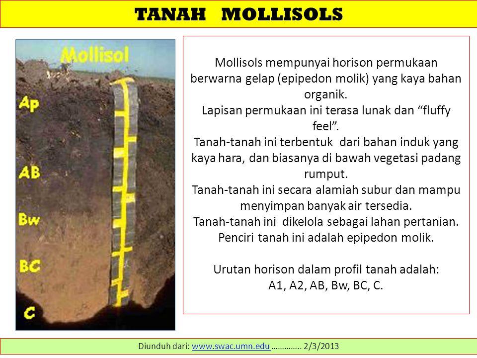 TANAH MOLLISOLS Mollisols mempunyai horison permukaan berwarna gelap (epipedon molik) yang kaya bahan organik.