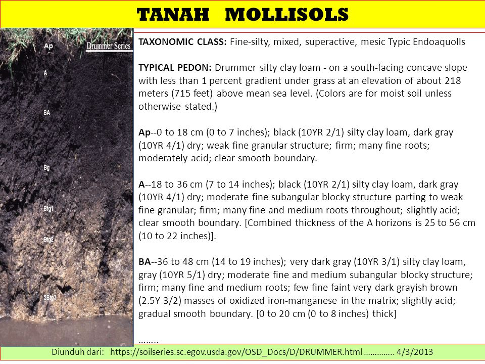 TANAH MOLLISOLS TAXONOMIC CLASS: Fine-silty, mixed, superactive, mesic Typic Endoaquolls.